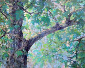 Bonnie Brooks -- Spring Maple I