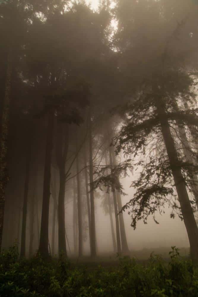 105--Kenya Forest