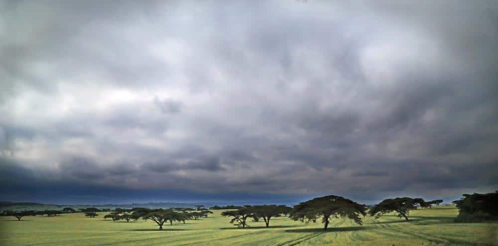 37--Kenya Fields