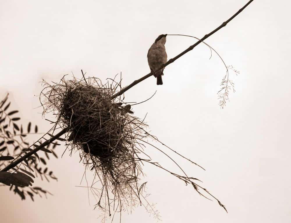 63--Bird On A Wire