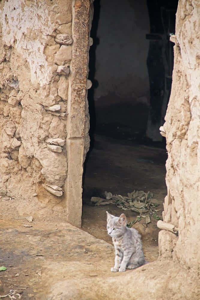 66--Kenya Kitten